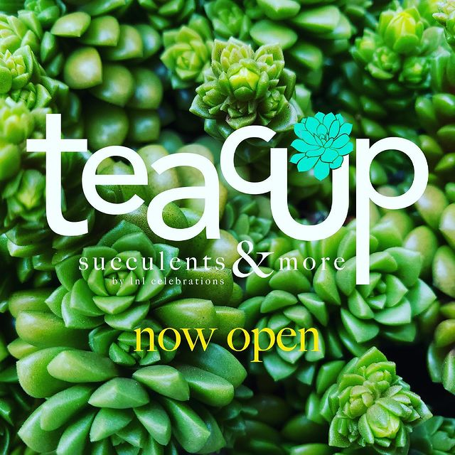 Teacup Succulents and More now open at the Shops at Mission Viejo